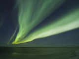 Aurora Borealis  Beaufort Sea  Alaska  USA