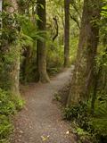 Track to Purakaunui Falls  Catlins  South Otago  South Island  New Zealand