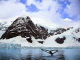 A Whale Fluke in Front of Snow Covered Mountains Along the Weddell Sea in Paradise Bay  Antarctica