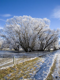 Hoar Frost  Oturehua  South Island  New Zealand