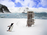 A Gentoo Penguin (Pygoscelis Papua) at the Arctowsky Polish Base  Antarctica
