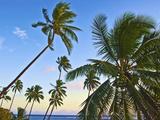 Nanuku Levu  Fiji Islands Palm Trees with Coconuts  Fiji  South Pacific  Oceania