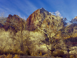 Cottonwood Trees in Winter  Zion National Park  Utah  USA