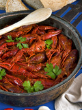 European Freshwater Crayfish in Tomato Sauce (Austropotamobius Pallipes)