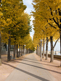 Tree-Lined Pathway Along Elbe River Dresden  Germany