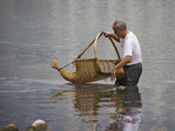 Catching Fish with Fishing Basket in the River  Guangxi  China