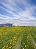 House on the Meadow of Wild Flowers  Iceland