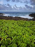 Poipu  Kauai  Hawaii  USA