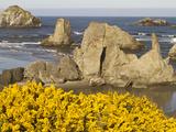 Coastal Views  Bandon  Oregon  USA