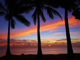 Sunset and Palm Trees  Coral Coast  Viti Levu  Fiji  South Pacific