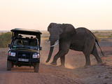 Elephant and Jeep  Amboseli  Kenya