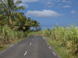 Sugarcane Plantation  Reunion Island  French Overseas Territory