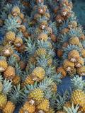 Pineapple Stall at Suva Municipal Market  Suva  Viti Levu  Fiji  South Pacific