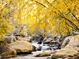 Fall Foliage at Creek  Eastern Sierra Foothills  California  USA