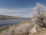 Serviceberry  Horsetooth Reservoir  Fort Collins  Colorado  USA