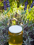 Lavender Honey in Jar and Lavender Plant