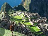 Llama  Machu Picchu  Peru