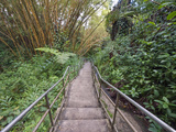 Path Through Bamboo Forest  Akaka Falls State Park  Hawaii  USA