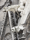 Gargoyles Perched on Notre Dame Cathedral  Paris  France