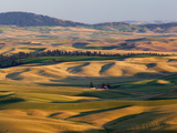 Palouse Farmland  Whitman County  Washington  USA