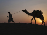 Man with Camel on the Desert at Sunset  Jodphur  Rajasthan  India