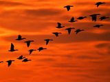 Flying Birds Silhouette  Cape May  New Jersey  USA