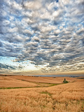 Dawn Breaks on Wheat Field  Walla Walla  Washington  USA