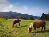 Horses by Jaizkibel Road  Hondarribia  Spain