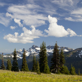 Alpine Meadow and Sarvent Glaciers  Mount Rainier National Park  Washington  USA