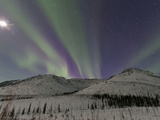Northern Lights  White Mountain National Recreation Area  Alaska  USA