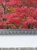 Eikando Temple  Kyoto  Japan