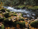 Autumn on the Salmon River  Welches  Oregon  USA