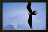 Courage: Bald Eagle
