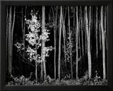 Aspens  Northern New Mexico  1958