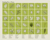 Catalog 1 - Trees