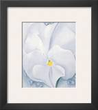 White Pansy  c1927