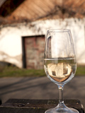 Glass of White Wine (Riesling) at Wine Cellar  Village of Vlkos  Brnensko  Czech Republic  Europe