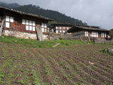 Typical Houses with Potato Fields in Phobjikha Valley  Bhutan  Asia