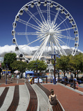 Ferris Wheel  the Waterfront  Cape Town  South Africa  Africa
