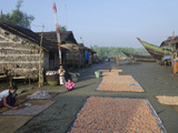 Woman Laying Fish for Drying in the Sun  Lay Win Kwin Village  Irrawaddy Delta  Myanmar (Burma)