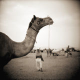 Camel Fair in Pushkar  India