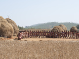 Tribal Dancing by Village Women Celebrating the Rice Harvest  Rural Orissa  India  Asia