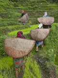 Female Farmers in Field with Traditional Rain Protection  Lwang Village  Annapurna Area