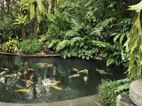 Koi Fish Pond  Manila  Philippines  Southeast Asia  Asia