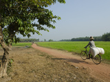 Farmer Carrying Big Bag on Her Bicycle by Rice Paddies  Myaungma  Irrawaddy Delta  Myanmar (Burma)