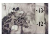 13' Giraffe