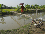 Monk with Umbrella Crossing a Bamboo Bridge  Myaungma  Irrawaddy Delta  Myanmar (Burma)  Asia