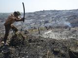Man Slashing Vegetation on Burnt Hill Side after Deforestation  Irrawaddy Delta  Myanmar (Burma)