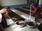 Interior of Tea Factory  Nepal Tea Is Essentially Identical to Darjeeling Tea  Fikkal  Nepal  Asia