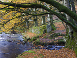 Autumn Scenes Beside Oare Water Near Robbers Bridge  Exmoor National Park  Somerset  England  UK
